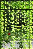 Viele grüne leafages auf der cirrus — Stockfoto