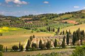 Paisaje de colinas de la toscana al aire libre — Foto de Stock