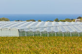 View of an agricultural greenhouses — Stock Photo