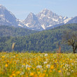 Stock Photo: Green grassland and mountains in bavaria