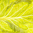 Fresh green lettuce salad closeup — Stock Photo #11102370