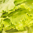 Fresh green lettuce salad closeup — Stock Photo #11235726