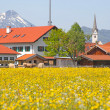 Modern village in Bavaria in the spring blossom — Stock Photo
