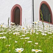Väggen i kapellet med kamomill fält, alperna, schweiz — Stockfoto