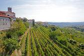Houses among the vineyards in summer.Slovenske Konjice, Slovenia — Stock Photo