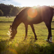 Portrait of a horse grazing — Stock Photo