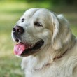 Portrait young beauty dog — Stock Photo