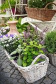 Herb leaf and flowers selection in a rustic wooden basket — Stock Photo
