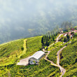 View from Darjeeling city, Queen of Hills, Tea plantation garden, fog rolling down from hill — Stock Photo #12210659
