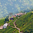 View from Darjeeling city, Queen of Hills, Tea  garden,fog rolling down — Stock Photo