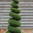 Topiary Tree — Stock Photo