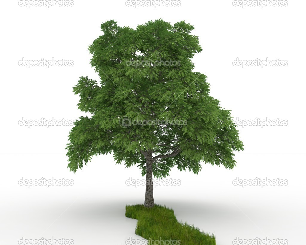 Tree isolated on a white — 图库照片 #11265987