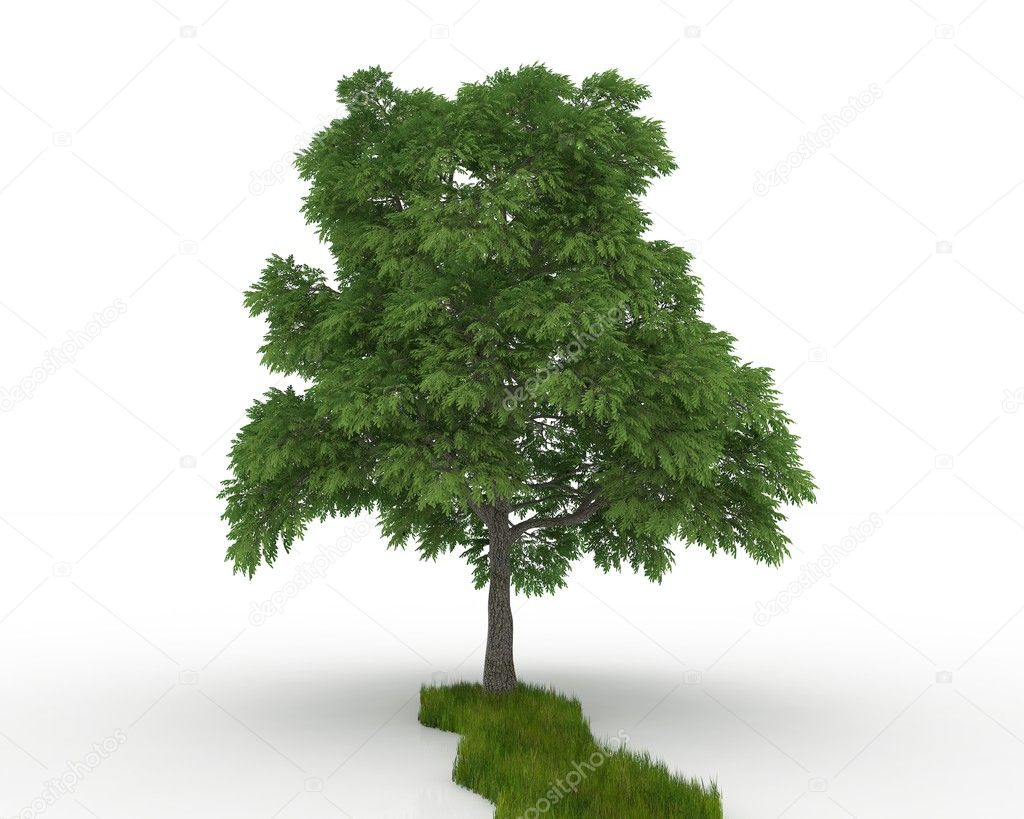 Tree isolated on a white — Stockfoto #11265987
