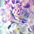 Beautiful lilac flowers background — Stock Photo #12043223