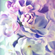Royalty-Free Stock Photo: Beautiful lilac flowers background