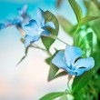 Beautiful blue flowers background — Stock Photo #12043224