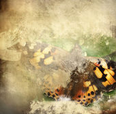 Butterfly overlaid with grunge texture — Stock Photo