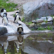 Group of penguins in the zoo - Stock Photo