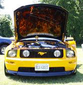 Mustang — Stockfoto