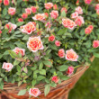 Garden rose bouqet — Stock Photo