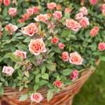Garden rose bouqet — Stock Photo