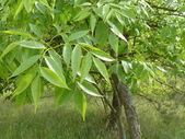 Green trees beautiful nature background — Stock Photo