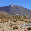 The conical volcano Mount Teide or El Teide - Stock Photo