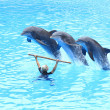 Leaping Bottlenose Dolphins - Stock Photo