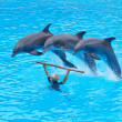 Three Bottlenose Dolphins, Tursiops truncatus, - Stock Photo