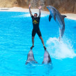 Leaping Dolphins - Stock Photo