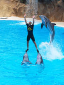 Leaping Dolphins — Stock Photo