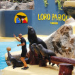 Stock Photo: Sealion Show