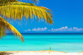 Palm leaves and the cuban beach of Varadero — Stock Photo
