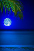 Beach at night with the moon and a palm tree — Stock Photo