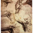 Drawings by Leonardo DaVinci - Foto de Stock