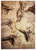 Drawings by Leonardo DaVinci — Stock Photo