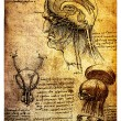 Stock Photo: Ancient anatomical drawings by Leonardo DaVinci