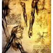 Ancient anatomical drawings by Leonardo DaVinci — Foto Stock #11572715