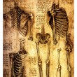 Ancient anatomical drawings by Leonardo DaVinci - Stock Photo