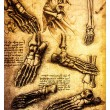 Ancient anatomical drawings by Leonardo DaVinci — Stock Photo