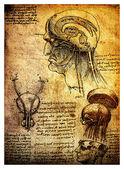 Starożytne rysunki anatomiczne przez leonardo da vinci — Zdjęcie stockowe