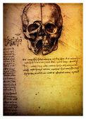 Leonardo davinci tarafından eski anatomik çizimler — Stok fotoğraf