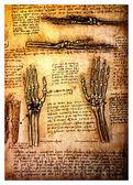 Ancient anatomical drawings by Leonardo DaVinci — Stock Photo