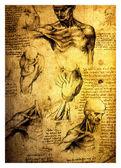 Oude tekeningen van leonardo davinci — Stockfoto