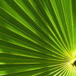 Palm leaf — Stock Photo #11101213