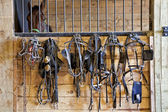 Harness Racing Equipment — Stock Photo