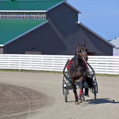 Harness Racing — Foto Stock