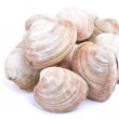 Quahaug Clam - Stock Photo