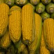 Corncobs in a market in Budapest - Stock Photo