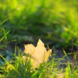 Autumn — Stock Photo